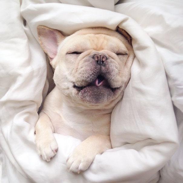 50 sắc thái đáng yêu khi ngủ của chú chó bull dễ thương nhất hệ Mặt Trời - Ảnh 14.