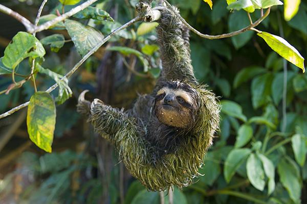 5 bật mí trớ trêu về chuyện đi cầu trong thế giới động vật - Ảnh 11.