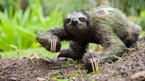 5 bật mí trớ trêu về chuyện đi cầu trong thế giới động vật - Ảnh 12.