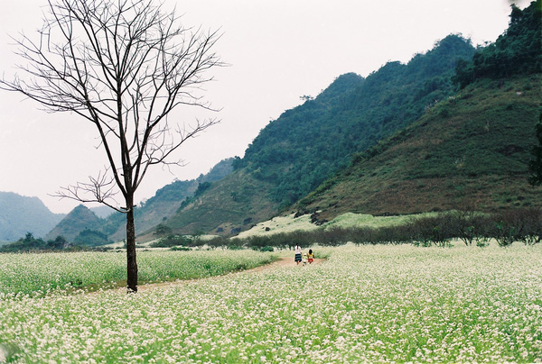 Tháng 11 đến rồi, nhất định phải đi Tây Bắc để hưởng cái lạnh và ngắm 3 loài hoa này - Ảnh 12.