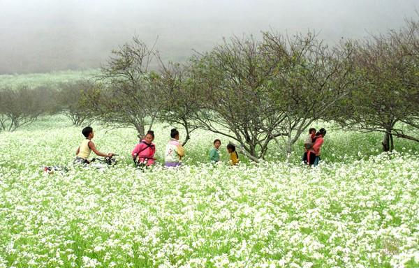 Tháng 11 đến rồi, nhất định phải đi Tây Bắc để hưởng cái lạnh và ngắm 3 loài hoa này - Ảnh 10.