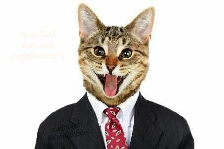 Đắng lòng thanh niên bị Facebook cho ra đảo, chỉ vì chia sẻ ảnh mèo - Ảnh 2.