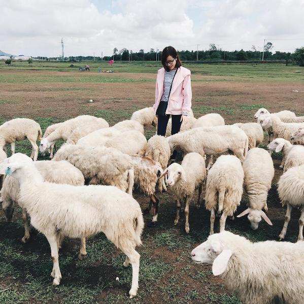 Ở Việt Nam có 3 cánh đồng nuôi cừu, tới đây ảnh có chụp kiểu gì cũng xinh! - Ảnh 8.