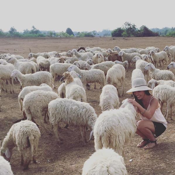 Ở Việt Nam có 3 cánh đồng nuôi cừu, tới đây ảnh có chụp kiểu gì cũng xinh! - Ảnh 9.