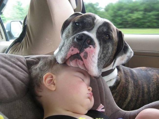 22 tình bạn đáng ngưỡng mộ của trẻ con và thú cưng - Ảnh 8.