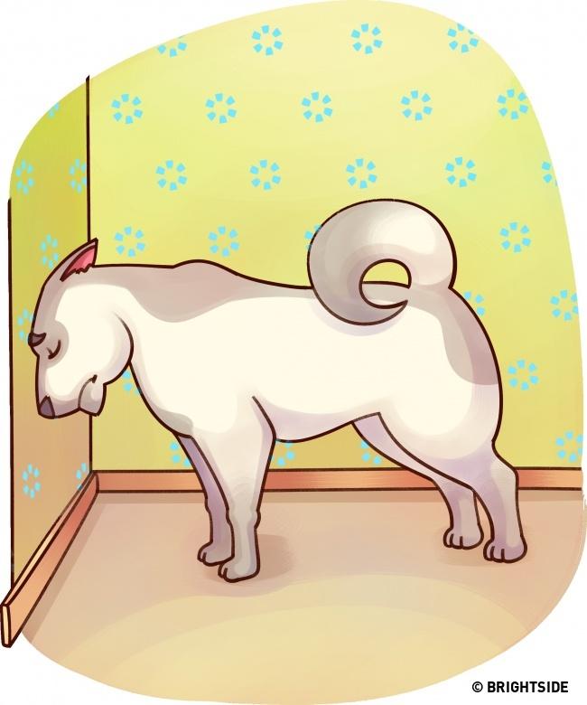 Muốn biết thú cưng có bệnh không, hãy theo dõi 15 ngôn ngữ cơ thể này - Ảnh 14.