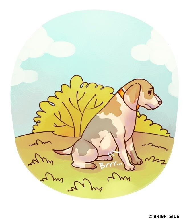 Muốn biết thú cưng có bệnh không, hãy theo dõi 15 ngôn ngữ cơ thể này - Ảnh 9.
