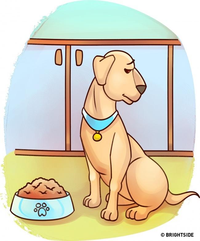 Muốn biết thú cưng có bệnh không, hãy theo dõi 15 ngôn ngữ cơ thể này - Ảnh 8.