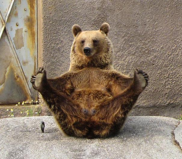 16 bé động vật biết tập yoga dẻo hơn cả bạn - Ảnh 10.
