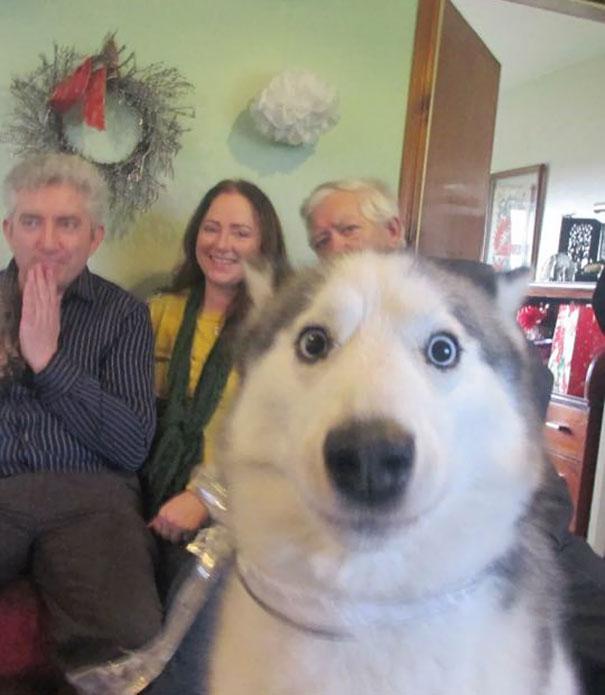 17 khoảnh khắc vô duyên không hề nhẹ của những chú chó - Ảnh 1.