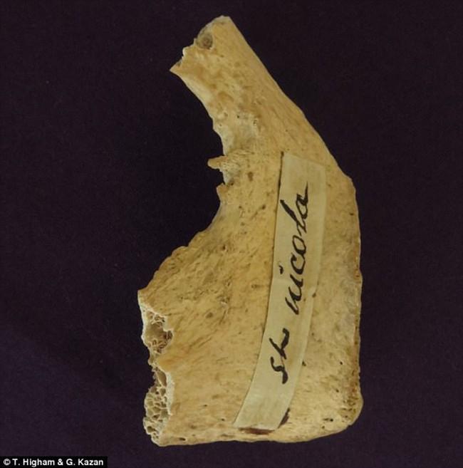 Mới tìm thấy mẩu xương được cho là của Ông già Noel - Ảnh 1.