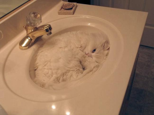 Muôn vàn kiểu chơi trốn tìm hài hước của các thánh mèo - Ảnh 3.