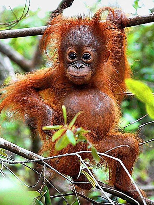 11 kiểu tạo dáng chụp ảnh tự sướng của các loài động vật - Ảnh 21.
