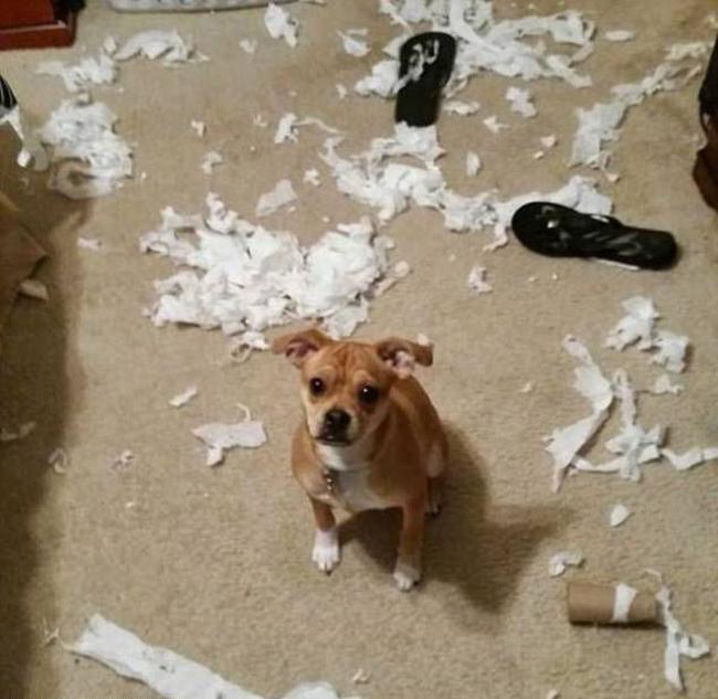 21 chú chó mèo nhân dịp chủ đi vắng là phá banh cả nhà - Ảnh 21.
