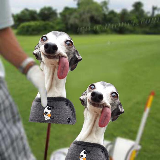 Chú chó thè lưỡi mặt ngố bị các thánh photoshop rảnh việc lôi ra chế ảnh - Ảnh 7.