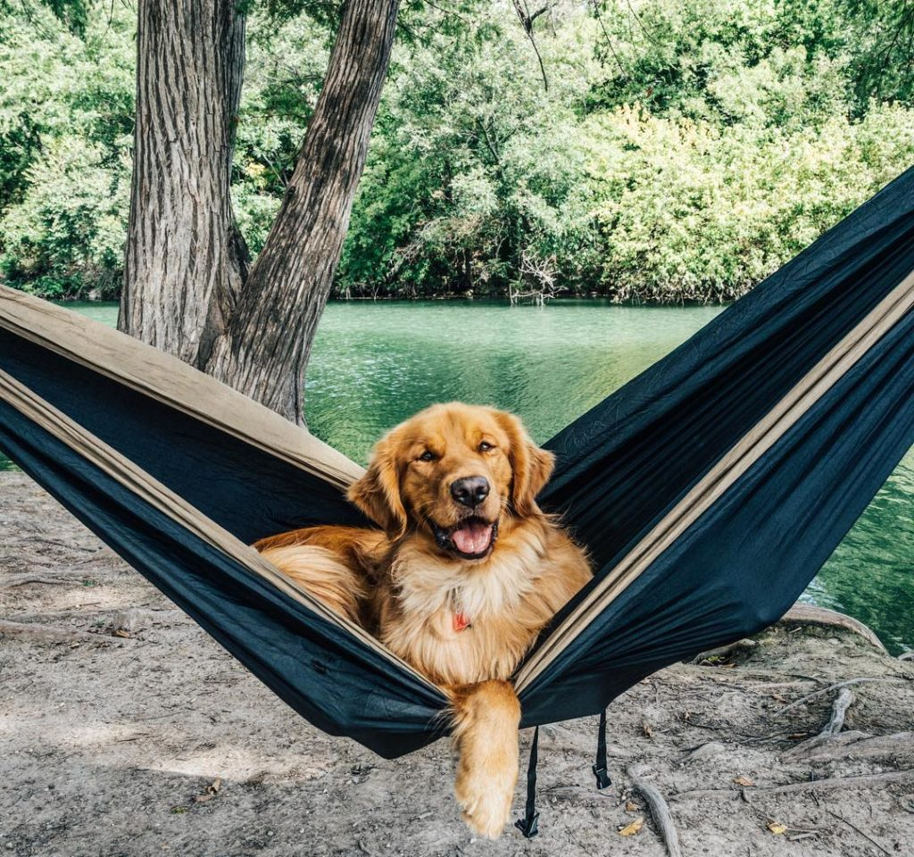 Kết quả hình ảnh cho chó đi du lịch nước anh