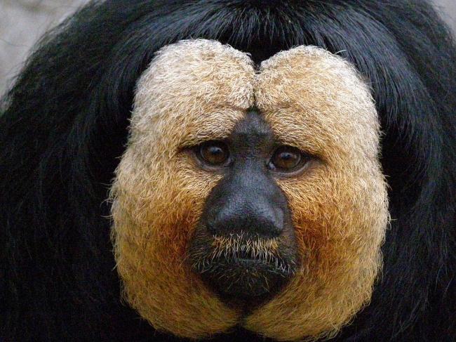 13 loài động vật kỳ bí không ai nghĩ là có thực trên đời - Ảnh 1.