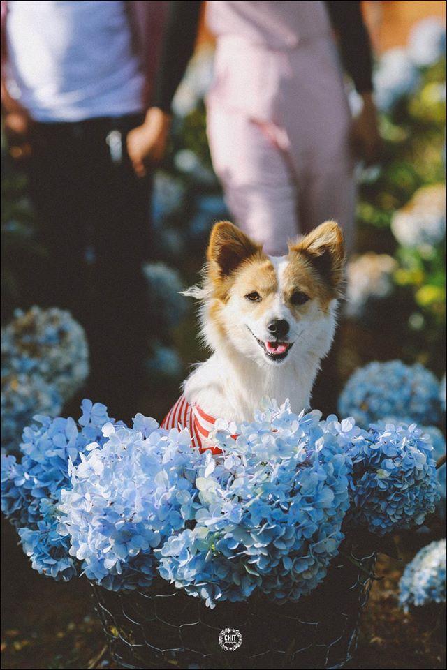 Cánh đồng hoa cẩm tú cầu đẹp mê hồn sẽ là điểm đến hot nhất ở Đà Lạt những ngày tới! - Ảnh 8.