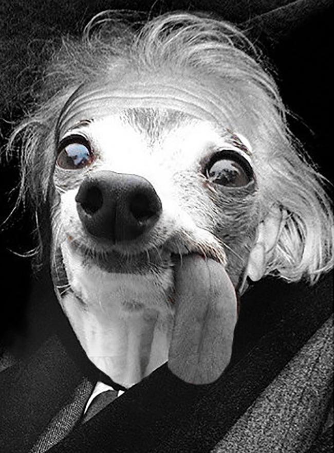 Chú chó thè lưỡi mặt ngố bị các thánh photoshop rảnh việc lôi ra chế ảnh - Ảnh 13.