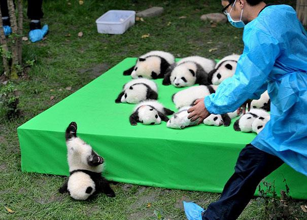 17 khoảnh khắc chết cười của những con vật bị quạt trần rơi vào đầu - Ảnh 21.