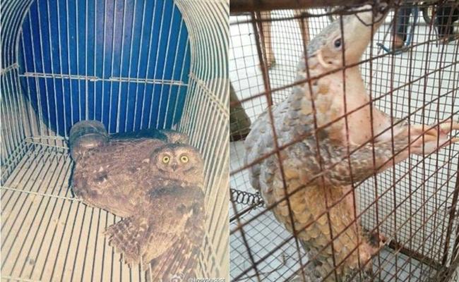 Ăn thịt động vật quý hiếm còn đăng hình lên mạng, công chúa tê tê bị cảnh sát bắt giữ - ảnh 2