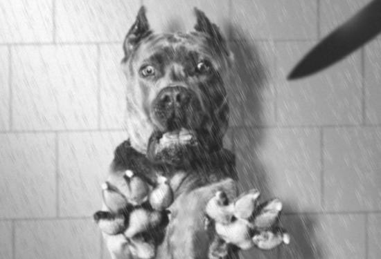 Loạt ảnh chế chú chó sợ hãi khiến bạn xem xong cũng phải buồn cười - Ảnh 7.