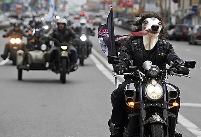 Chú chó thè lưỡi mặt ngố bị các thánh photoshop rảnh việc lôi ra chế ảnh - Ảnh 15.