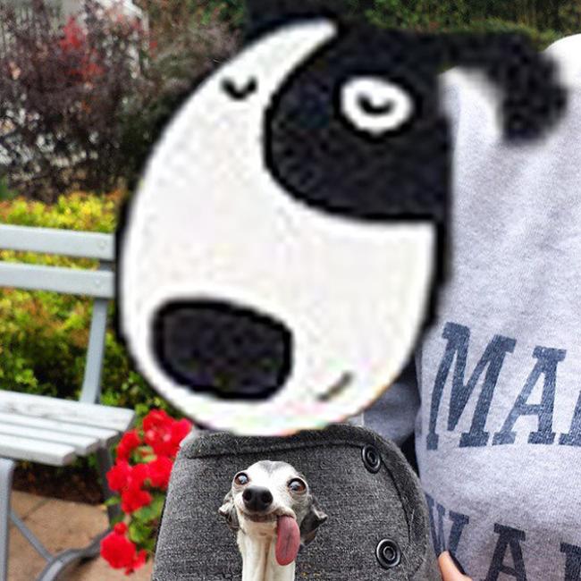 Chú chó thè lưỡi mặt ngố bị các thánh photoshop rảnh việc lôi ra chế ảnh - Ảnh 17.
