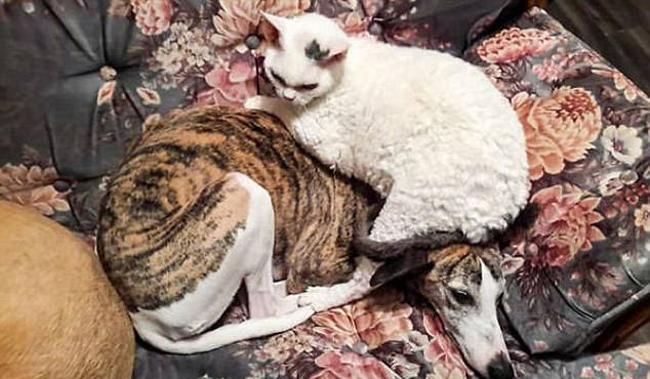 21 chú chó mèo nhân dịp chủ đi vắng là phá banh cả nhà - Ảnh 37.