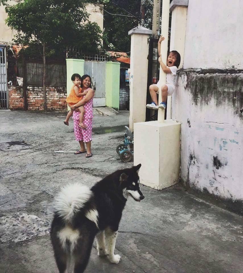Bức ảnh nổi tiếng nhất hôm nay: Bé gái khóc thét vì sợ chó, leo tót lên cột điện