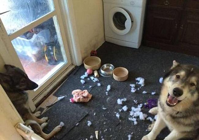 21 chú chó mèo nhân dịp chủ đi vắng là phá banh cả nhà - Ảnh 41.
