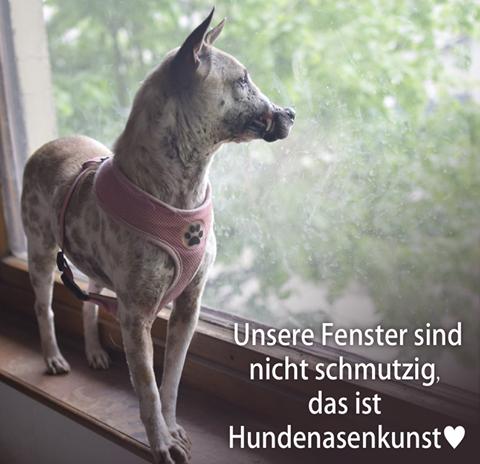 Được tổ chức động vật Đức nhận nuôi, chú chó bị buộc mõm tới hoại tử ngày nào giờ đã là một Việt kiều hạnh phúc - Ảnh 6.