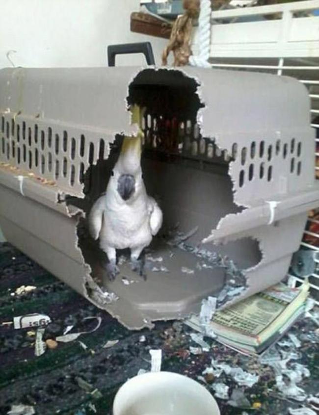 21 chú chó mèo nhân dịp chủ đi vắng là phá banh cả nhà - Ảnh 5.