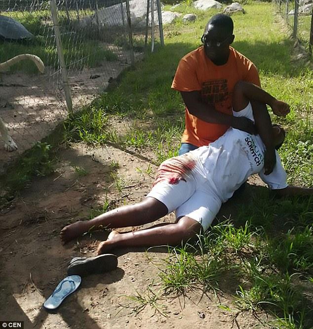 Tựa vào hàng rào chụp ảnh bên chuồng sư tử, nữ du khách bị tấn công phải nhập viện