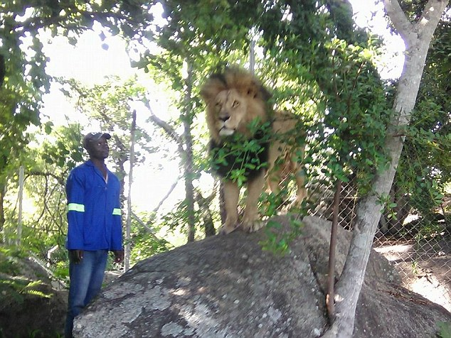 Tựa vào hàng rào chụp ảnh bên chuồng sư tử, nữ du khách bị tấn công phải nhập viện - Ảnh minh hoạ 3