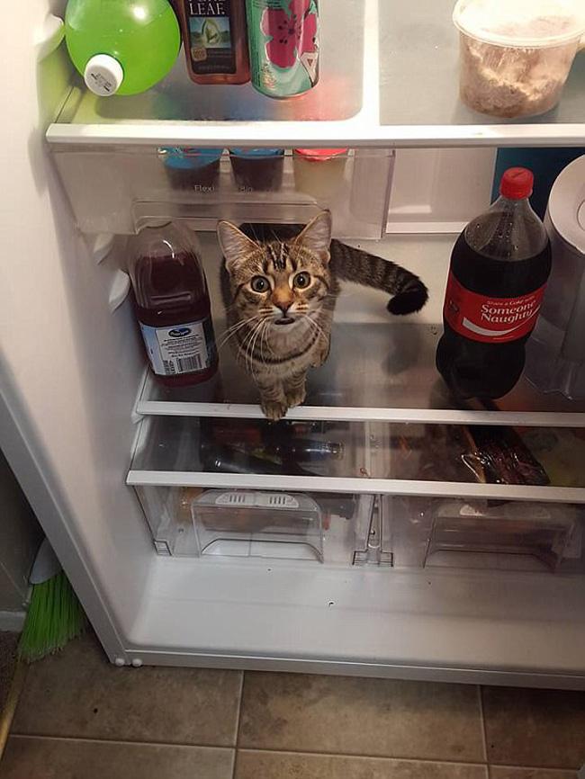 Muôn vàn kiểu chơi trốn tìm hài hước của các thánh mèo - Ảnh 5.