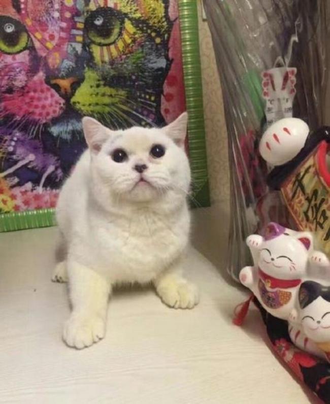 Mua thú cưng nhưng không có tiền nuôi, cô gái trẻ lột da mèo trả lại cho bà chủ cửa hàng - ảnh 1