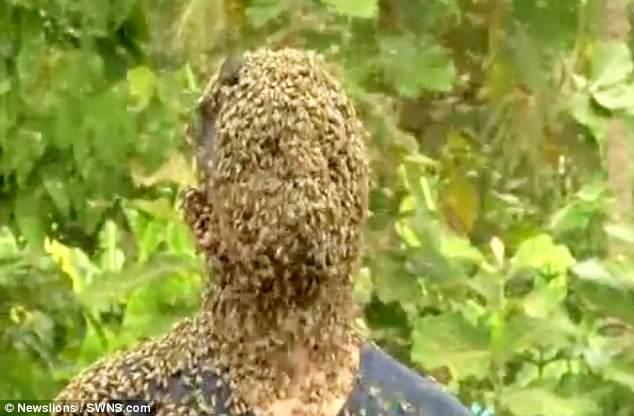 Để 60.000 con ong bâu kín mặt, chàng trai vẫn thản nhiên nói chuyện đọc sách - Ảnh 1