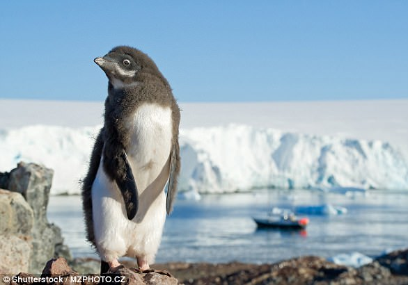 Không chỉ có băng tuyết và chim cánh cụt, Nam Cực đang nhiều thứ này đến mức quan sát được từ vũ trụ - Ảnh 1