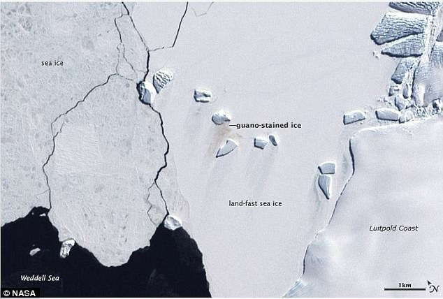 Không chỉ có băng tuyết và chim cánh cụt, Nam Cực đang nhiều thứ này đến mức quan sát được từ vũ trụ - Ảnh 2