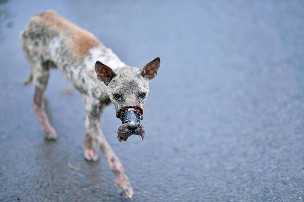 Được tổ chức động vật Đức nhận nuôi, chú chó bị buộc mõm tới hoại tử ngày nào giờ đã là một Việt kiều hạnh phúc - Ảnh 1.