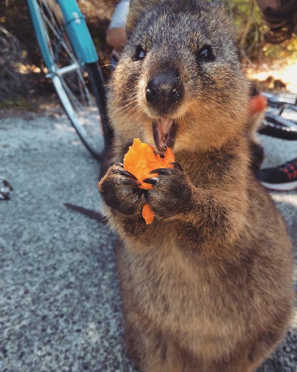 Chỉ ước mình được như loài chuột túi mini hạnh phúc và vui vẻ nhất thế gian - Ảnh 3.