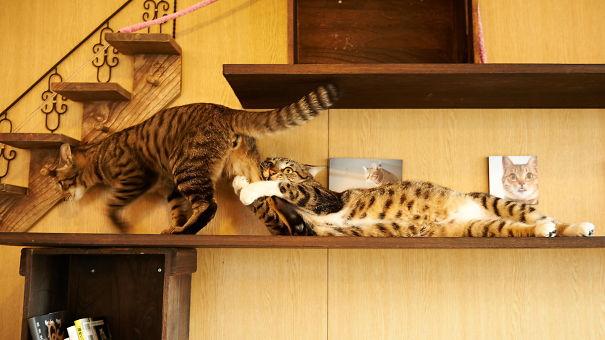 17 biểu cảm chứng tỏ mèo là bọn diễn sâu nhất quả đất - Ảnh 3.