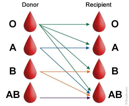 Tại sao phải chia ra các nhóm máu và câu chuyện lịch sử đầy bi kịch - Ảnh 6.