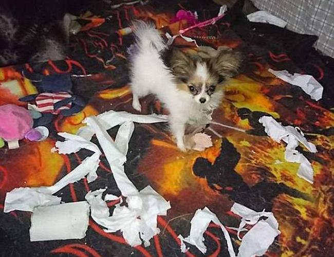 21 chú chó mèo nhân dịp chủ đi vắng là phá banh cả nhà - Ảnh 11.