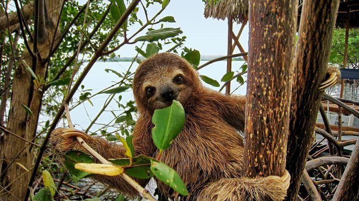 8 sự thật giúp bạn nhận ra con lười là sinh vật thú vị nhất quả Đất