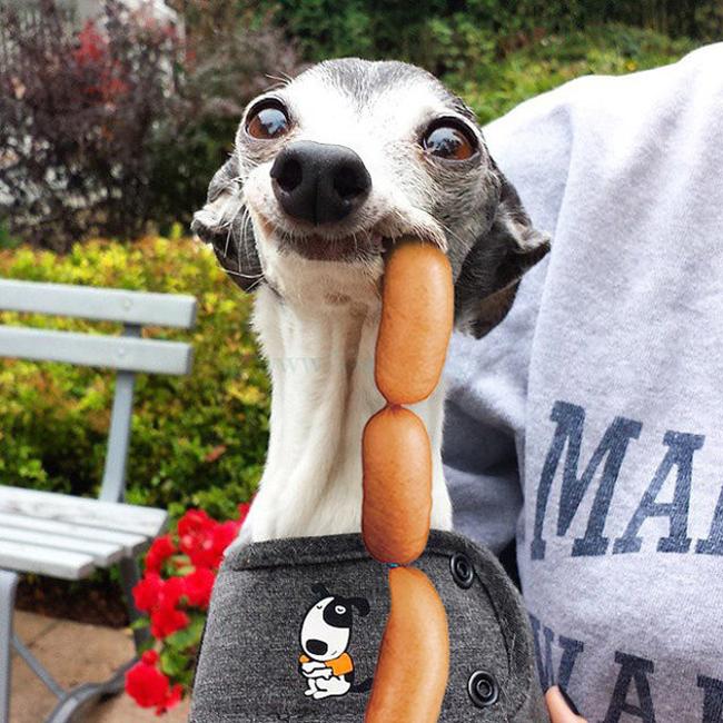 Chú chó thè lưỡi mặt ngố bị các thánh photoshop rảnh việc lôi ra chế ảnh - Ảnh 25.