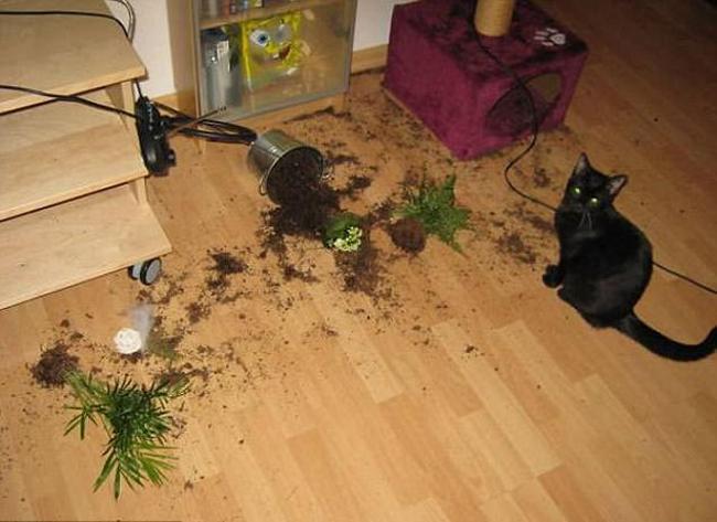 21 chú chó mèo nhân dịp chủ đi vắng là phá banh cả nhà - Ảnh 13.