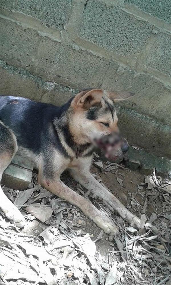 Được tổ chức động vật Đức nhận nuôi, chú chó bị buộc mõm tới hoại tử ngày nào giờ đã là một Việt kiều hạnh phúc - Ảnh 8.