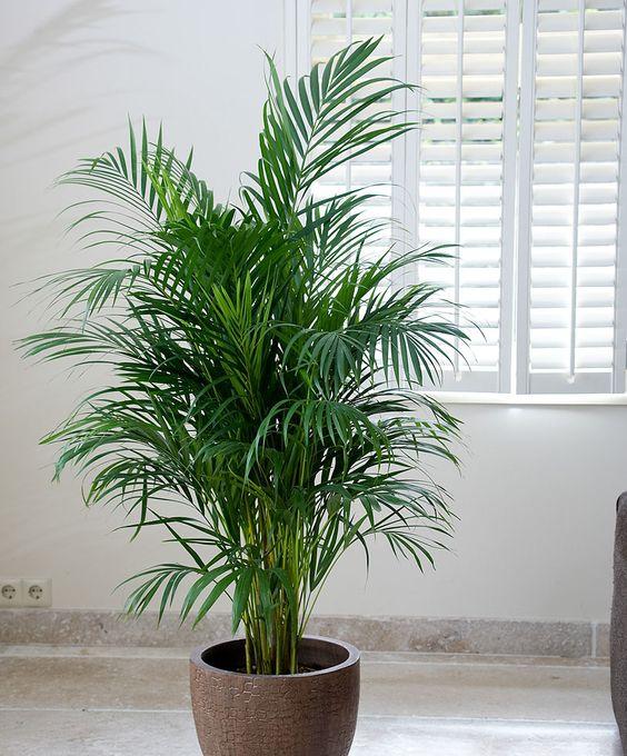 NASA khuyên trồng những loại cây này trong nhà, bạn sẽ không bao giờ bị cảm lạnh và mất ngủ nữa - Ảnh 1.